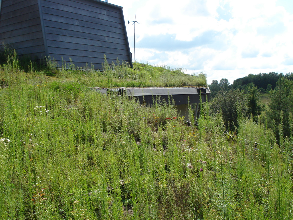Wilson Natural Home with Greenroof