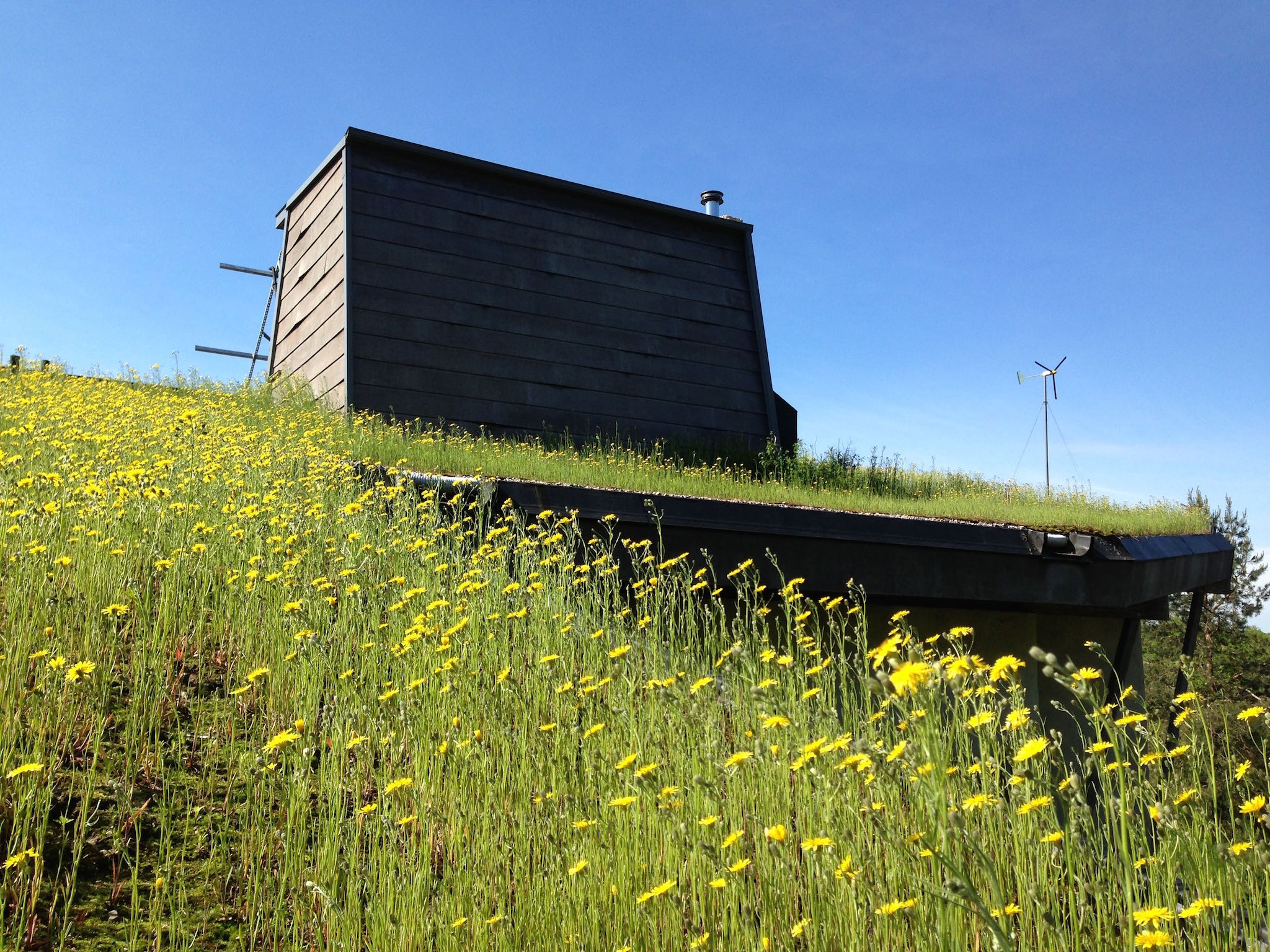 Wilson Natural Home Green Roof